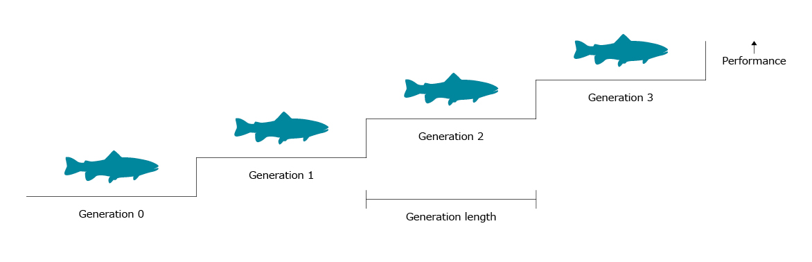Generation length - Troutex
